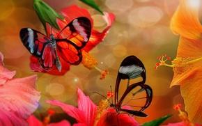 Картинка бабочки, фотошоп, гибискус