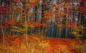 Картинка лес, листва, colors, Осень, листопад, trees, autumn, leaves, fall
