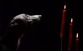Картинка взгляд, собака, свечи