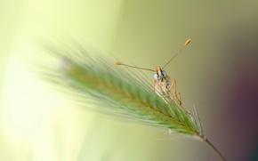 Картинка взгляд, бабочка, лапки, усики, травинка, колосок
