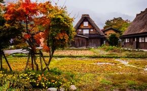 Обои деревья, цветы, горы, туман, дома, кусты