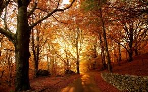 Картинка лес, листва, Осень, дорожка, autumn, leaves, path, fall