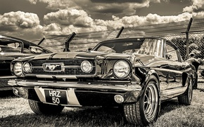Картинка Ford Mustang, 1965, передок, GT350H
