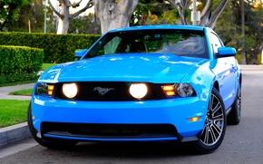 Обои 2010, Mustang, Ford