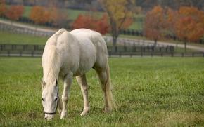 Обои дорога, поле, животные, трава, конь, лошадь, вилла, поля, жеребец, кони, фокус, лошади, пастбище, луг, пони, ...