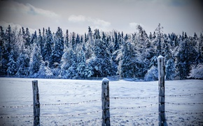 Картинка холод, зима, лес, снег, деревья, горы