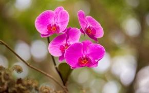 Картинка макро, лепестки, орхидея
