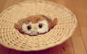 Картинка глаза, сова, игрушка, мягкая