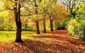Картинка forest, autumn, foliage