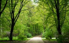 Картинка зелень, лес, лето, деревья, природа, парк, обои, Германия, Берлин