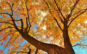 Обои небо, дерево, ствол, ветки, листья