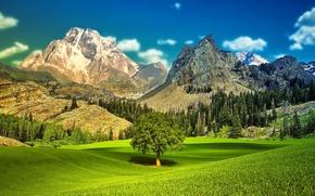 Картинка небо, трава, деревья, пейзаж, горы, долина