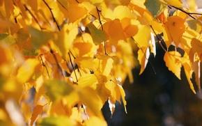 Обои дерево, природа, деревья, осень, листья