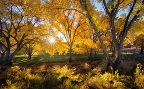 Картинка осень, листья, солнце, лучи, деревья, природа, время года