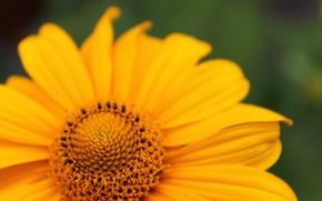 Картинка цветок, лето, макро, желтый, яркий, тепло, цвет, лепестки, бутон