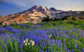 Картинка цветы, снег, горы, природа, деревья, луг, небо, облака