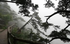 Обои Деревья, туман, тропа