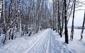 Картинка зима, лес, снег, природа, Пейзаж, берёзы
