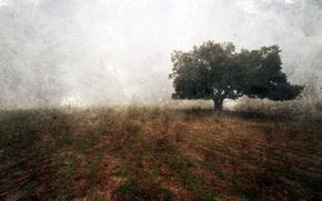 Картинка поле, пейзаж, стиль, фон, дерево