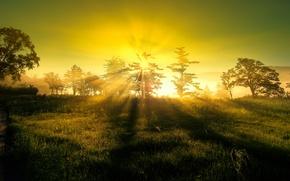 Картинка солнце, свет, природа