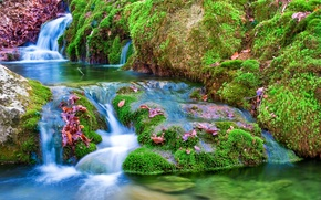 Картинка листья, камни, мох, речка