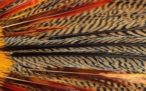 Картинка текстура, animal texture, фон на рабочий, перья экзотической птицы