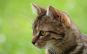 Картинка зелень, кошка, кот, животное