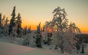 Обои зима, небо, облака, снег, деревья, закат, Финляндия, Лапландия