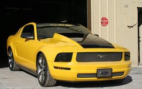 Картинка Mustang, Ford, Tampa, Jax, Wax