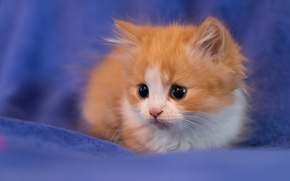 Обои взгляд, котенок, фон, малыш, рыжий