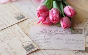 Обои тюльпаны, розовые, цветы, письма