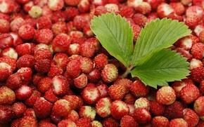 Обои красный, широкоформатные, земляника, широкоэкранные, фон, widescreen, HD wallpapers, обои, листик, листья, полноэкранные, еда. ягоды, background, ...