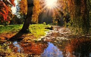 Картинка осень, листья, солнце, лучи, деревья, пейзаж, природа