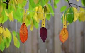 Картинка осень, листья, природа, краски, веревка, прищепка