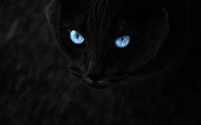 Картинка кот, взгляд, темно, красиво