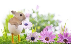 Картинка трава, цветы, природа, праздник, весна, кролик, Пасха, ножки, скорлупа, Easter