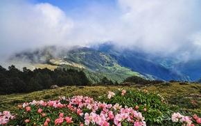 Картинка облака, деревья, цветы, горы, Альпы, рододендроны