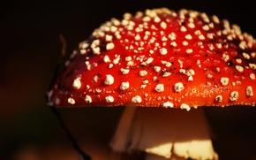 Картинка природа, фон, грибы
