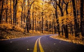 Картинка дорога, осень, лес, листья, деревья, ветки, листва