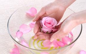 Картинка вода, роза, руки, лепестки, миска