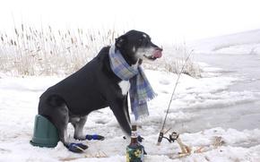 Картинка зима, снег, рыбалка, бутылка, рыбак, шарф, камыш, удочка