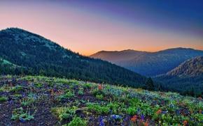 Обои горы, поляна, леса, цветов