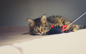Обои игрушка, глазки, котенок, взгляд, мышка