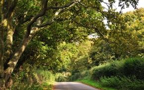 Картинка дорога, зелень, лес, деревья, кусты