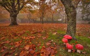 Картинка город, парк, грибы