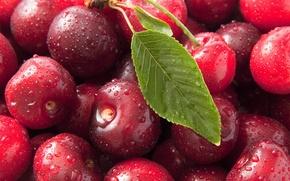 Обои макро, вишня, фото, сладкая, черешня, macro, Sweet cherry, ciliege