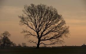Картинка поле, дерево, утро, крыши