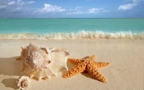 Картинка красота, прибой, раковина, берег, ракушки, песок, море, волны, вода, океан, звезда, горизонт, облака, морская звезда, ...