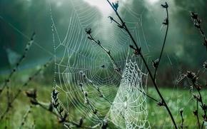Картинка осень, трава, капли, макро, туман, роса, паутина, Сентябрь