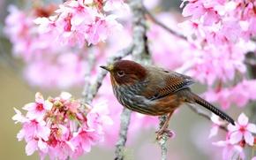 Обои дерево, цветение, ветка, весна, птица
